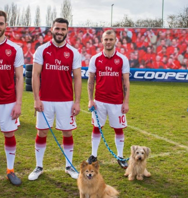 Cooper Tires – The Dogs of Arsenal